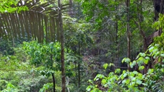 Rain Forest at Tiger Cave Temple Stock Footage