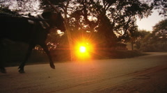 Beautiful silhouette of running horse pulling tourist cart at sunset by roads Stock Footage
