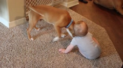 Toddler sitting on the ground trying to play with puppy Stock Footage