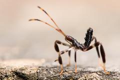 Leaf Footed Bug - stock photo