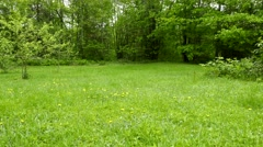 Overgrown back yard with dandelion pollen floating in air - stock footage