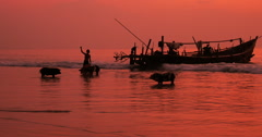 Rural Myanmar scene - Vendors unload alive pigs from trade boat on sea shore - stock footage