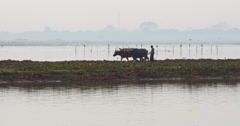 Young Burmese boy working on field land with two Asian buffaloes pulling plow Stock Footage