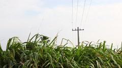 Green fields form land Stock Footage