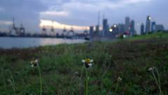 Timelapse of Flower with a Port and City Skyline Background at Sunrise Stock Footage