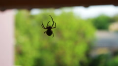 Spider sitting on a web Stock Footage