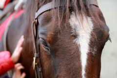 Horse close-up - stock photo