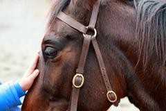 Horse being patted by child - stock photo