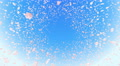 Sakura petals front BCb 4K Footage