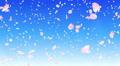 Sakura petals tornado Ab 4K Footage