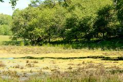 Overgrown wetland Stock Photos