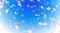 Sakura petals tornado Bb 4K Footage