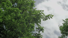 Leaves isolated on the blue sky and clouds background 3 axis stabilized shot Stock Footage