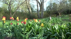 Vivid tulip flowers, tree and bower in spring park, garden. 4K Stock Footage