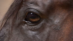 brown beautiful horse eye - stock footage