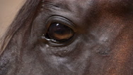 Stock Video Footage of brown beautiful horse eye