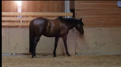 Side view horse eating at riding hall Stock Footage