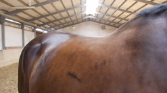 Side view horses back at riding hall Stock Footage