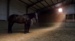 Rider pulling horse in riding hall Stock Footage