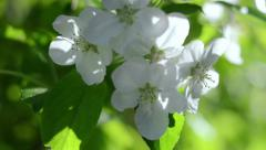 Flowers. Apple blossoms in spring time. Nature. Flores. Stock Footage