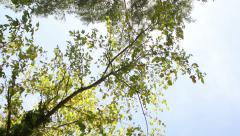 Green tree in park of Longchamp Marseille, France Stock Footage