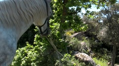 A withe horse in the wood under a tree Stock Footage