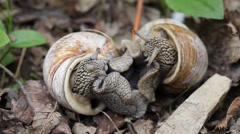 Big snails in the wild Stock Footage