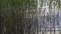 Slow water ripples through water-plants on a lakeside during a summer sunset Stock Footage