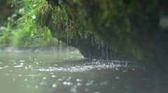 Small waterfall dribbles from a mossy rock Stock Footage