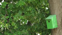 Bird house in green park Stock Footage