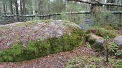 Stock Video Footage of Dolly shot of a moss-covered rock formation in a forest