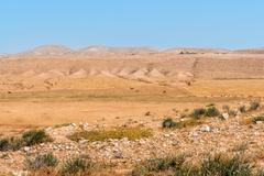 Negev desert, camels in the background - stock photo