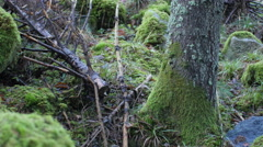 Dolly shot of a moss-covered rock formation in a forest Stock Footage