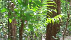 Women walking into jungle. Stock Footage