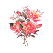 Stock Illustration of Vintage Watercolor Greeting Card with Blooming Red Roses