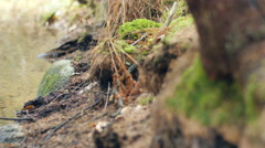 Dolly shot of rocky forest floor by a ditch - stock footage