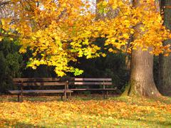 Benches in the autumn park Stock Photos
