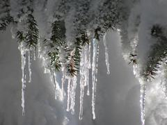Glittering icicles Stock Photos