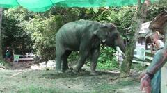 Tourist Feed Elephant Stock Footage