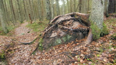 Dolly shot of a a large root-covered stone on a leaf covered hiking trail - stock footage