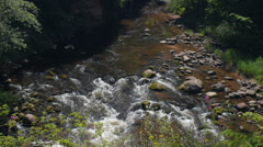 Top view of shallow river rapids in forest Stock Footage