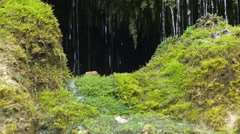 Spring water dribbles on moss Stock Footage