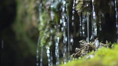 Tiny waterfall closeup dribbles on moss Stock Footage