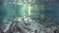 Baitfish on Edge of Mangrove Stock Footage