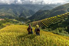 Rice fields on terraced of Mu Cang Chai, YenBai, Vietnam. Rice fields prepare - stock photo