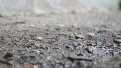 Water drops falling from the roof to the pavement - stock footage