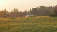 Dew on a green meadow during sunset with farmstead in background - stock footage