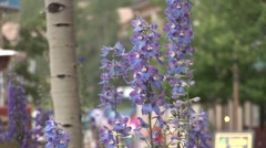Wildflowers in town square Stock Footage