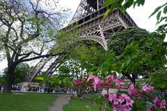 The Eiffel Tower with Pink Flowers - stock photo