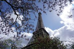 The Eiffel Tower with Cherry Blossoms Stock Photos